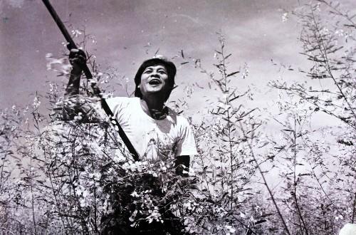 7e7ecbe41f 500x330 - Hậu trường khốc liệt của những phim Việt Nam kinh điển